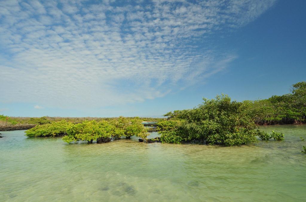 El Garrapatero, Galápagos