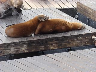 028 Zeeleeuwen bij Pier 39