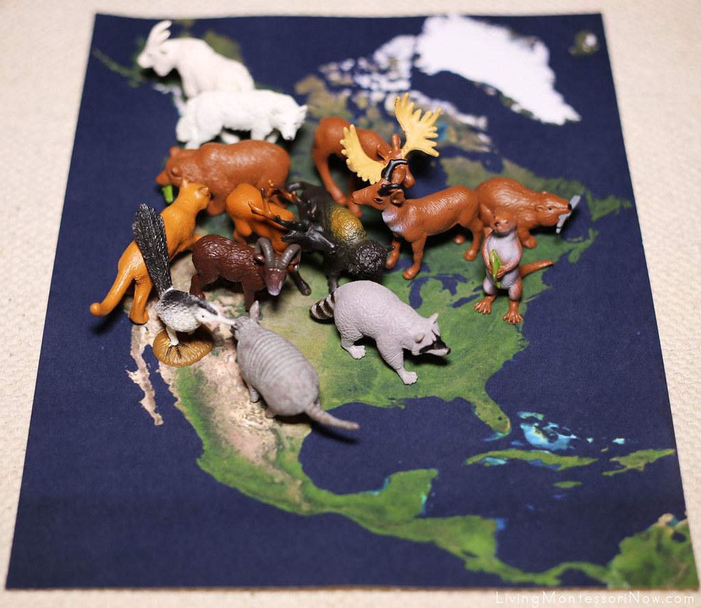 Animals On Satellite Map Of North America MontessoriInspi Flickr - Map of north america activity