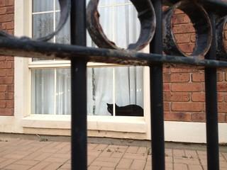 Black Cat Leonie Savvides