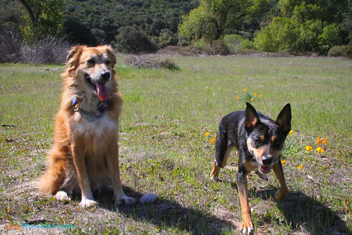Carmel Valley Dog Friendly Restaurants