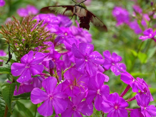 NC Arboretum Flower Trails ~ From My Carolina Home