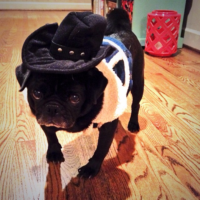 Howdy Partners Cowboy Pug Pugs Blackpug Blackpugs I Flickr