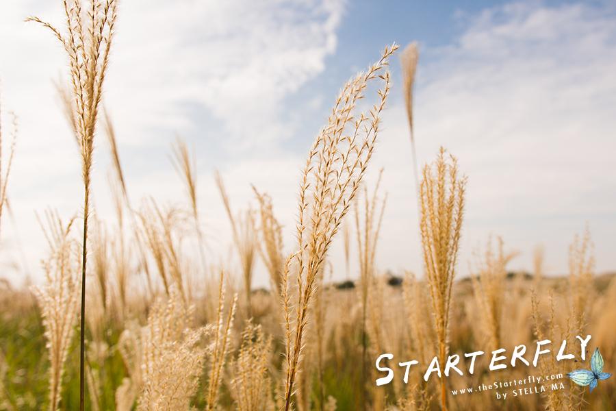 stellama_haneul-park_8
