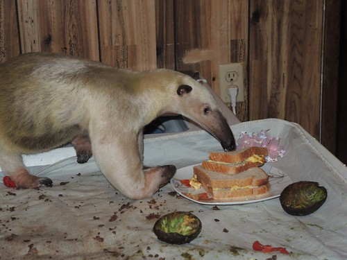 Pua investigates my sandwich