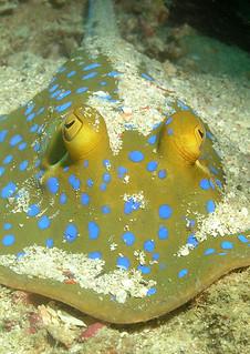 """<img src=""""padi-diving-soyak-tioman-island-malaysia.jpg"""" alt=""""PADI, diving, Soyak, Tioman Island, Malaysia"""" />"""