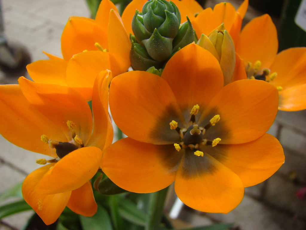 plante grasse a fleur orange
