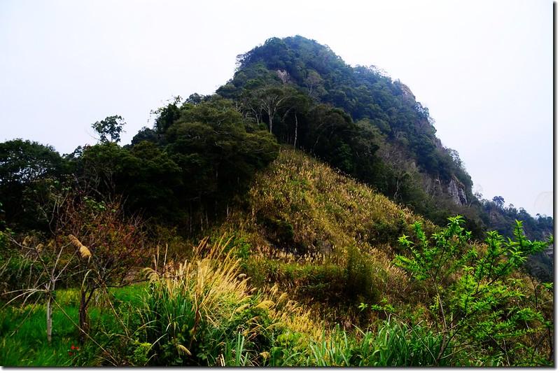 相思園望尖石山 1
