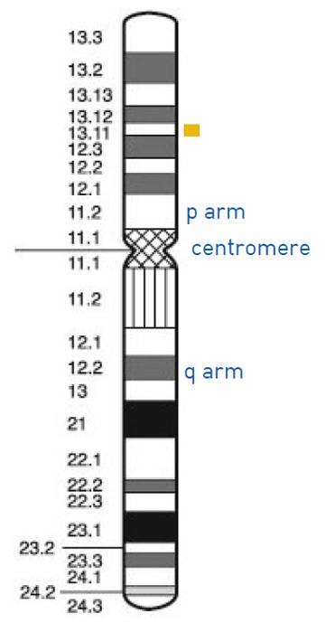 060816_genetics04