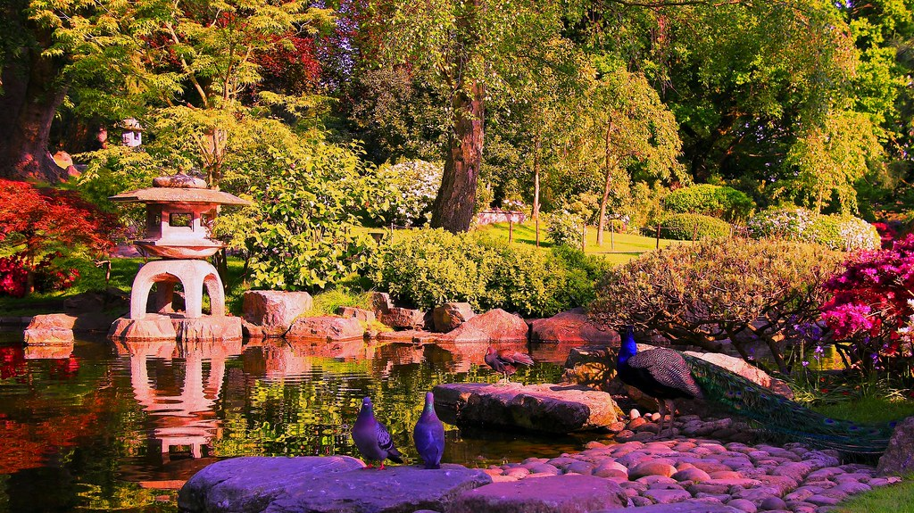 Image result for kyoto garden