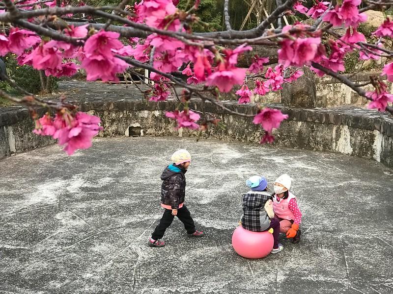 櫻花和小朋友