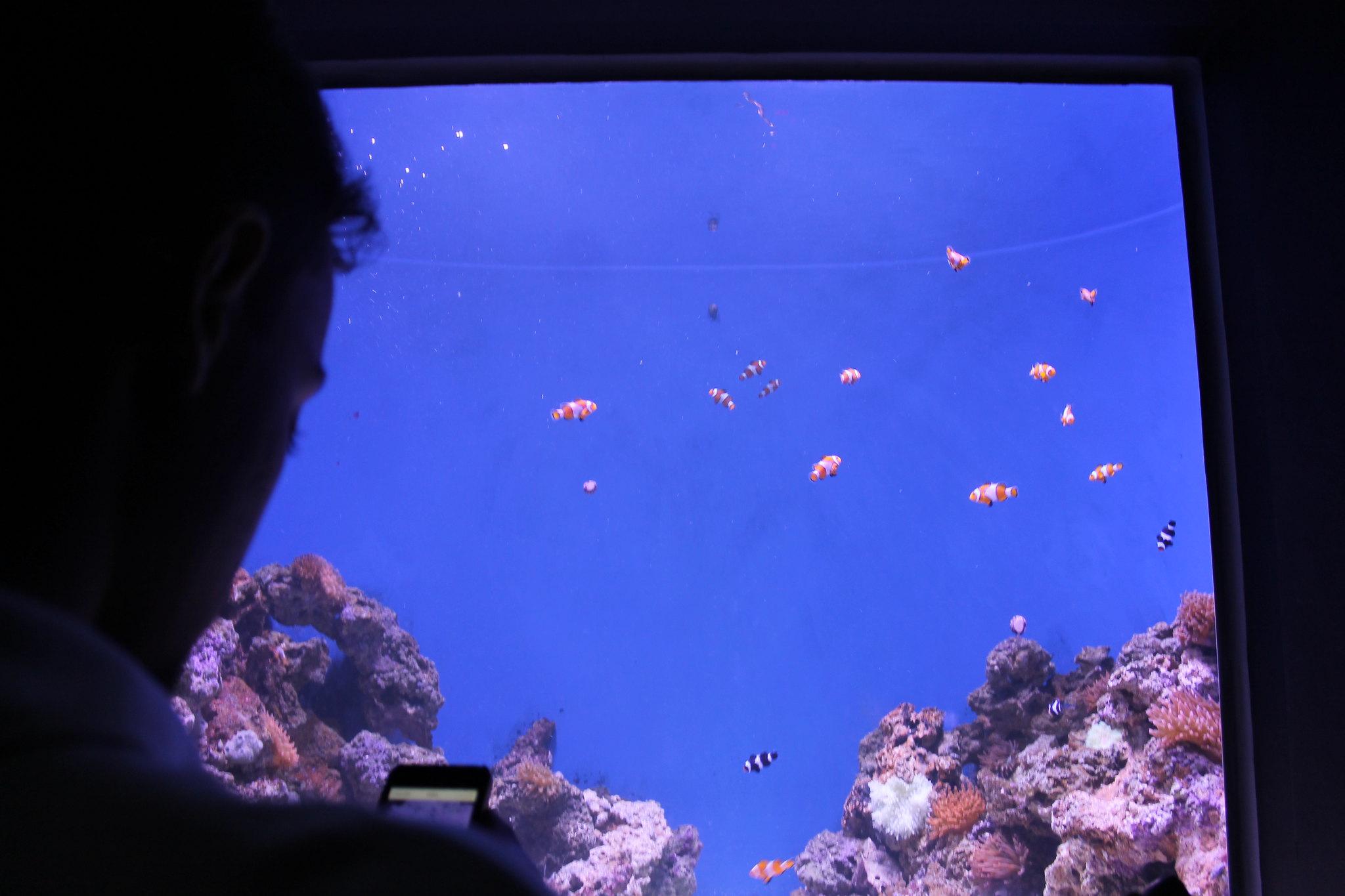 aquario8