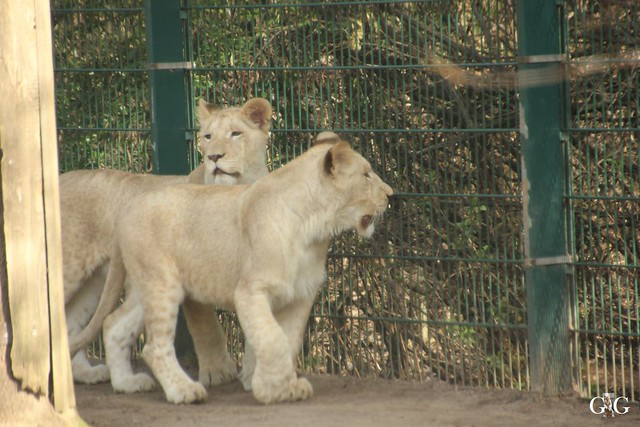 Ausflug Zoo Magdeburg 11.03.2017 Teil. 244