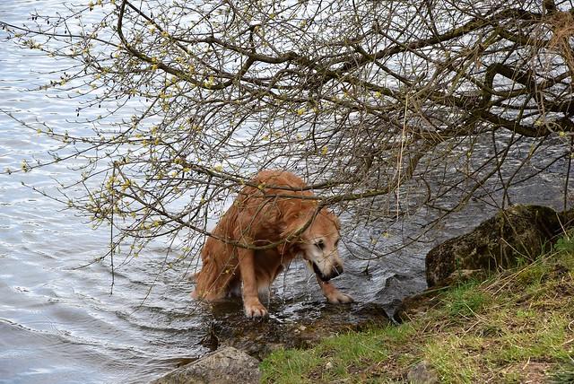 Dog River Aar 31.03 (1)
