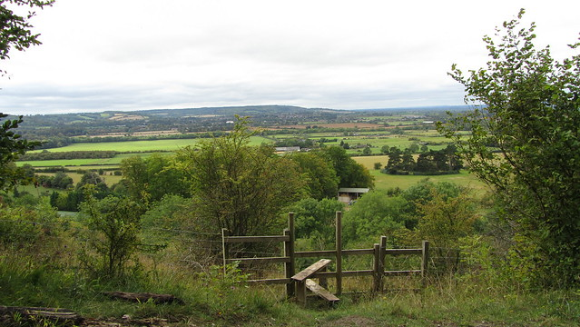 Looking to Wendover Woods