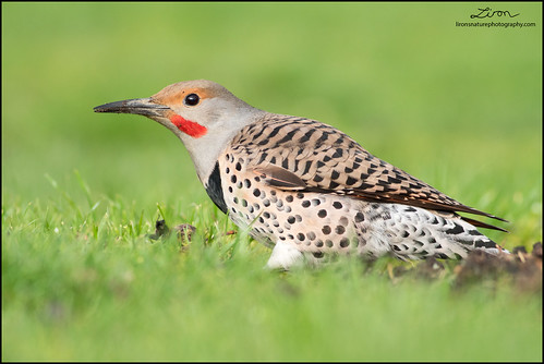 Northern Flicker  A Northern Flicker On The Ground In. Website Marketing St Louis Dental Clinic Nyc. Junk Removal Chicago Il Best Chat App For Mac. Email List Providers Reviews. State Farm Condo Insurance Tsc Auto Insurance. Document Imaging Specialist Salary. Technical Schools California. Most Popular Voip Providers St Jude College. Donate Car For Breast Cancer S&p 500 Stock