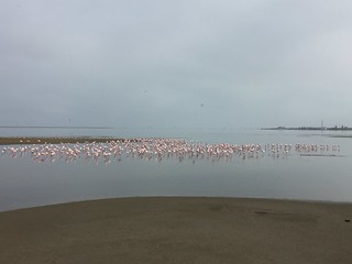 2017-03-06 Walvis Flamingoes
