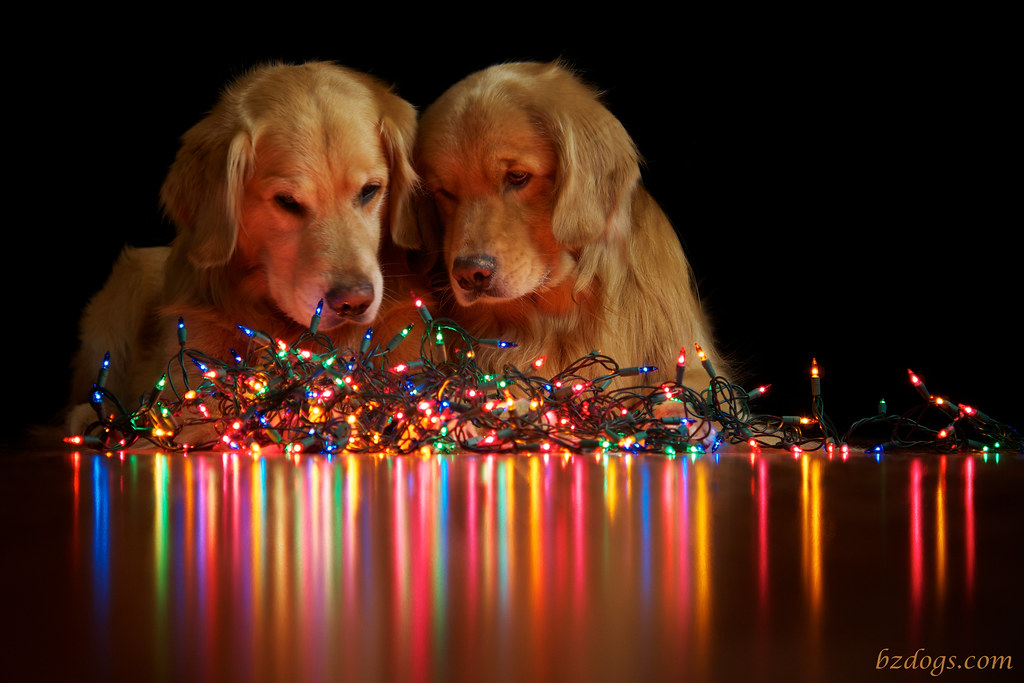 Christmas Lights | No no no… You two put those away. It's no… | Flickr