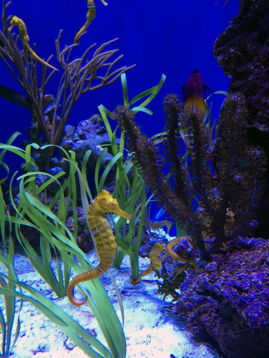 060516_aquarium41