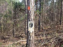 DNR Trail Cam 1