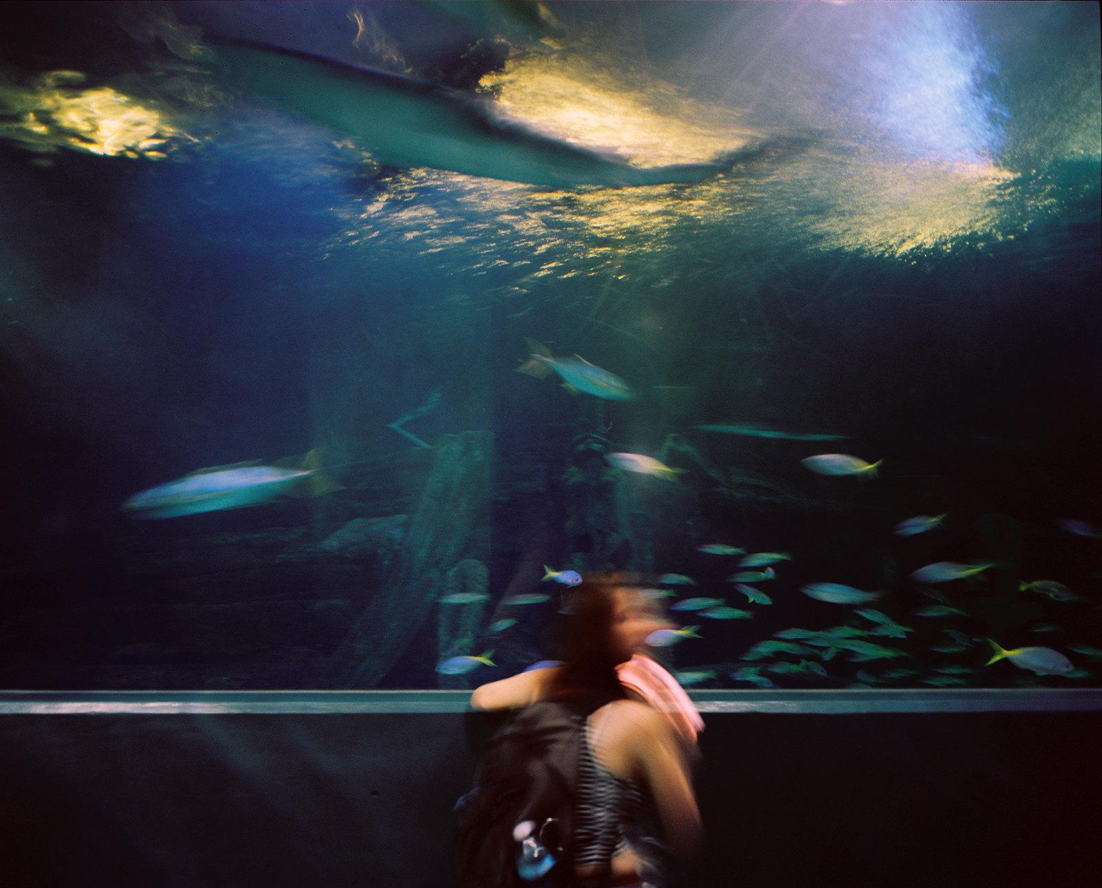 Melbourne Aquarium v