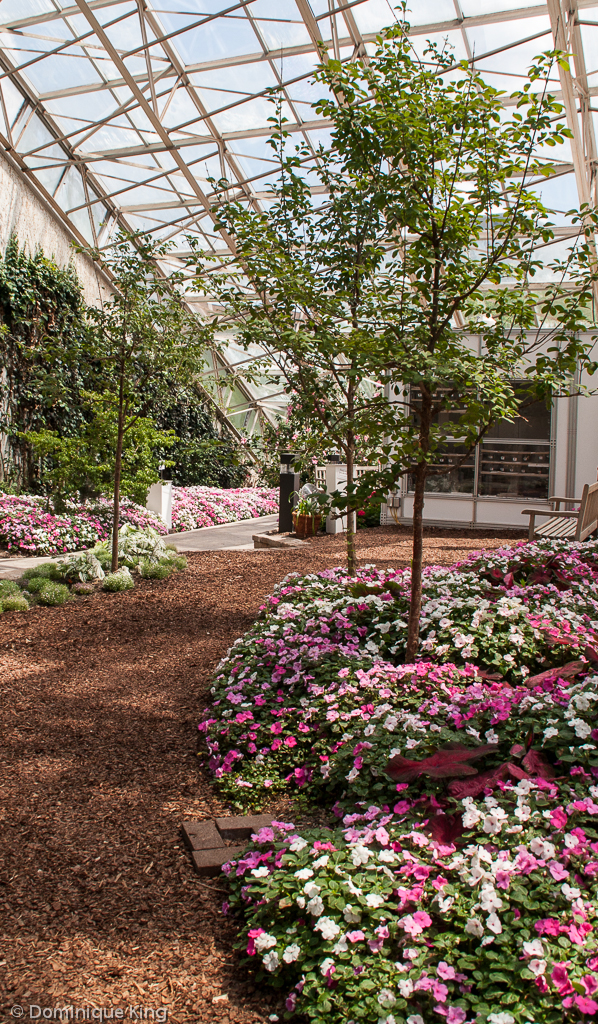 Genial ... Foellinger Freimann Botanical Conservatory, Fort Wayne, Indiana   By  Midwest Guest