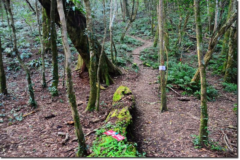 高台山登山步道 6