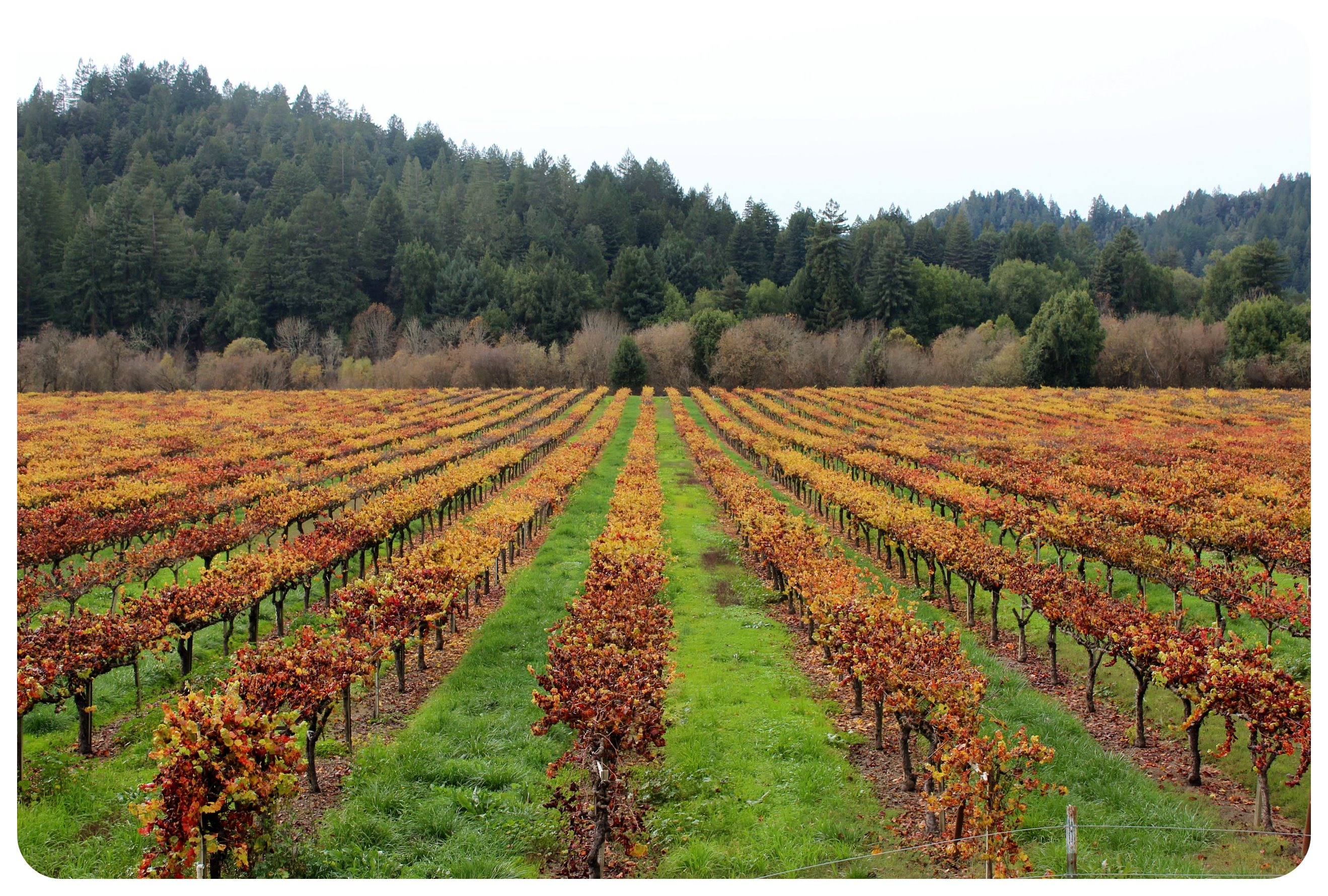 santa rosa korbel winery