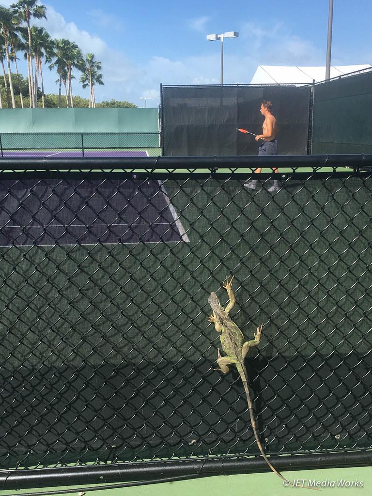 Miami Open: Iguana