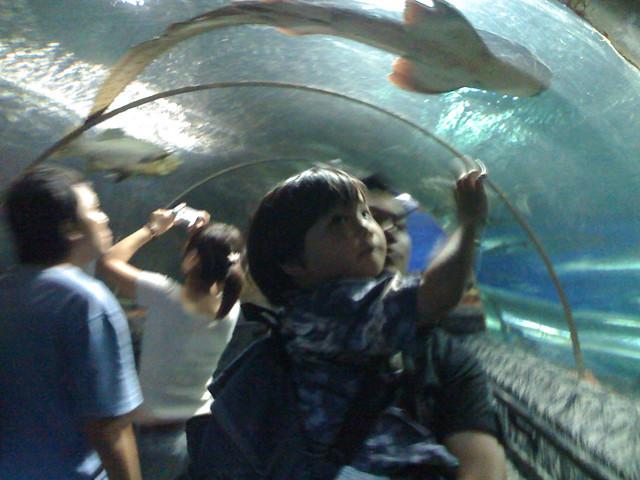 Singapore – Underwater World Sentosa – Lovely creatures