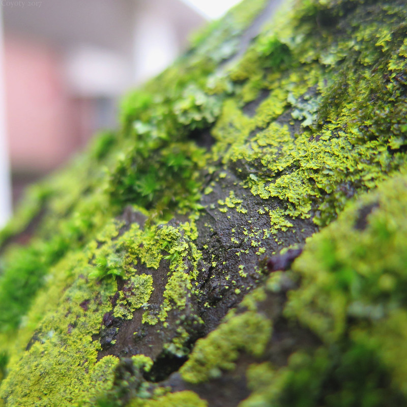 Really green tree moss and lichen