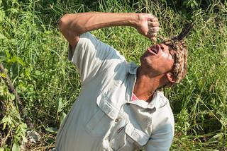 Auspressen von Fruchtfleisch der Kalahari Water Tuber