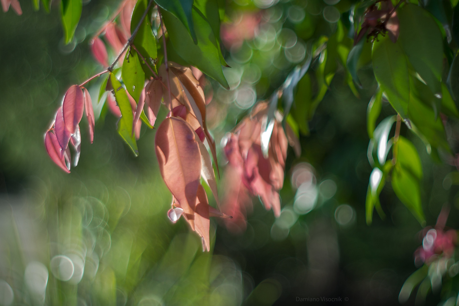 soft new leaves