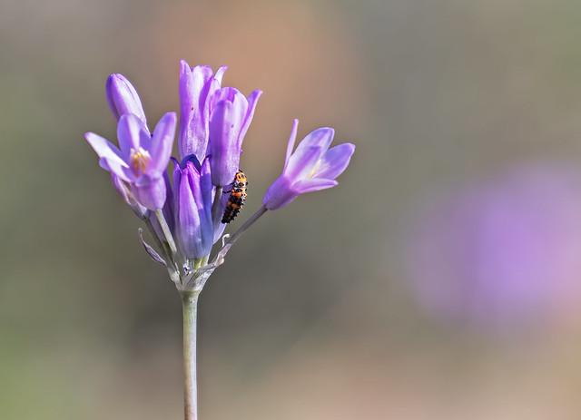 Flower-1-7D2-032017