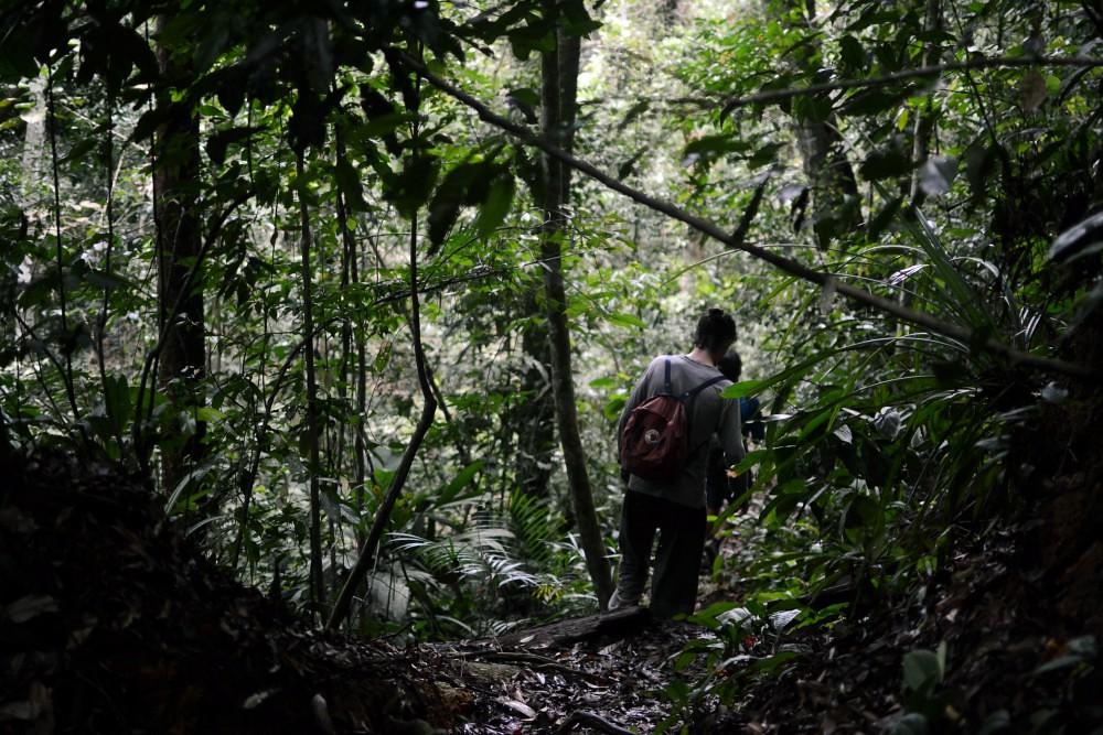 sumatra vaellus | sademetsa