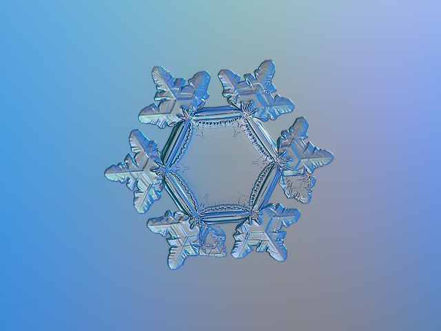 Snowflake picture: Sunflower, real snow crystal with large, flat and empty central hexagon, six short, broad arms with relief glossy surface, glittering on smooth gray - blue gradient background in cold light