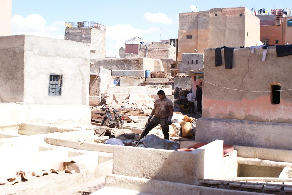 Ouvrier des tanneries à Marrakech au Maroc.