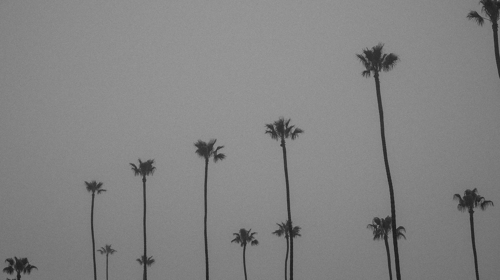 palm trees | by michaelj1998