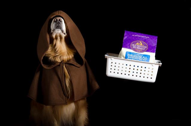Obi Wan Doggie