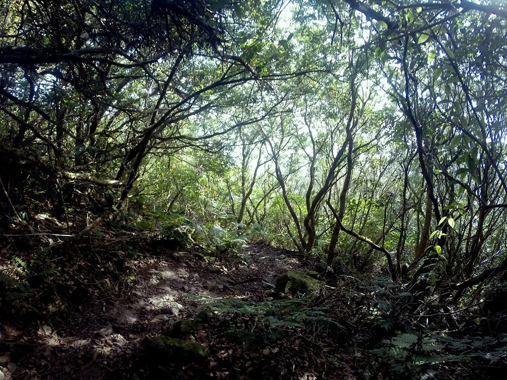 Mt. Hibok-Hibok (ascend) (4)