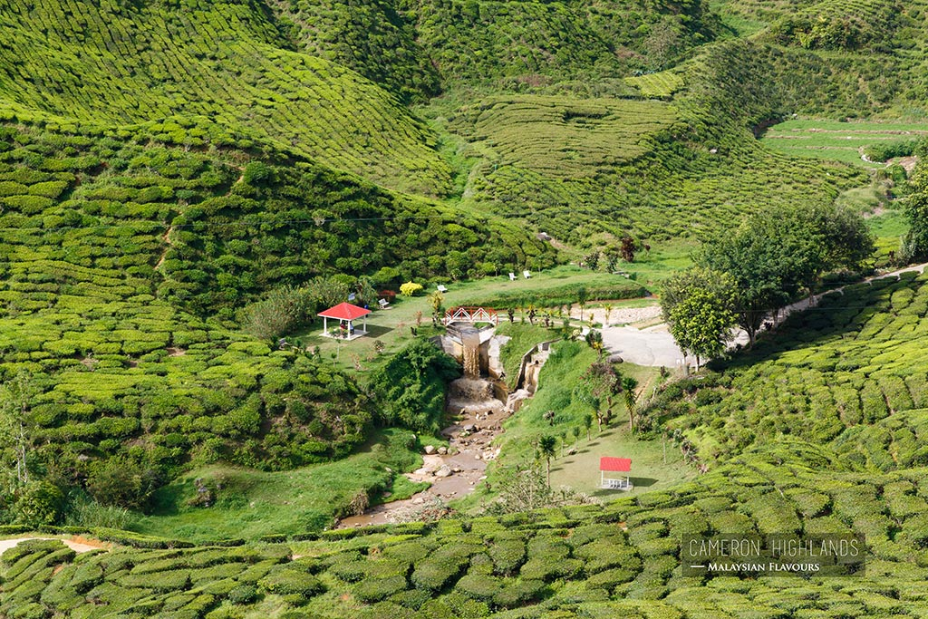 Top 15 Things to Do in Cameron Highlands
