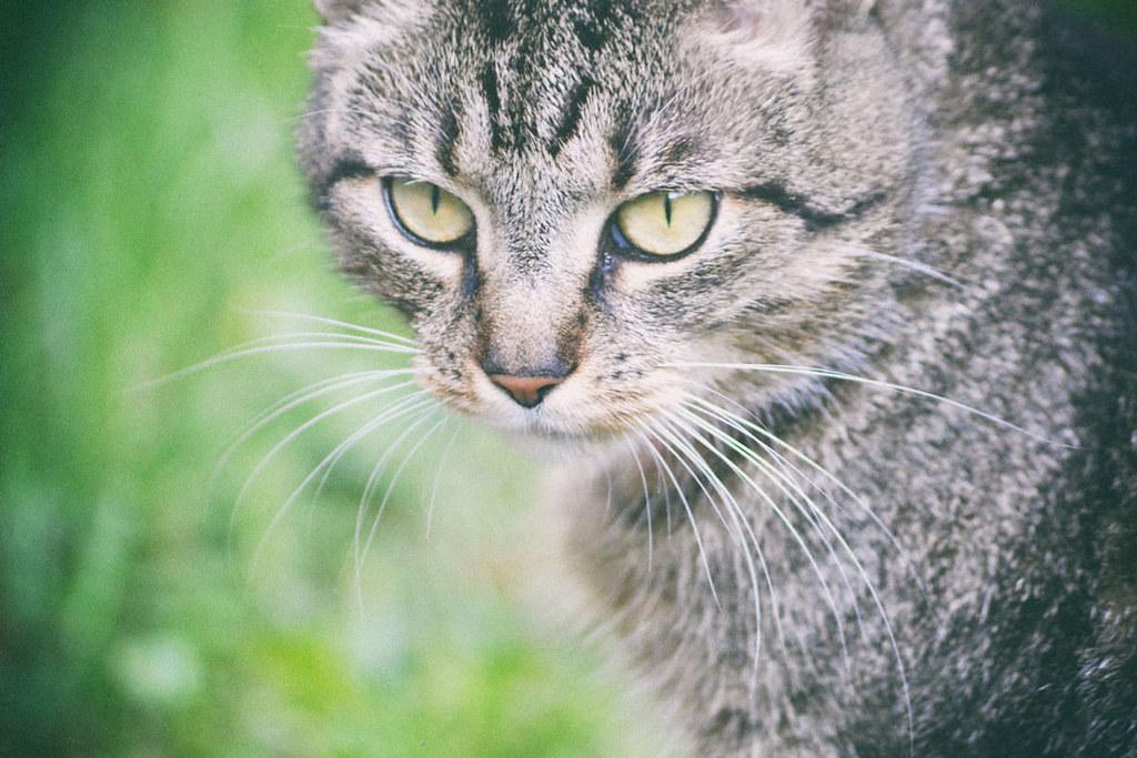 Zum Weltkatzentag