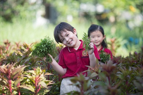 hệ  thống trường dân lập quốc tế Việt Úc VAS