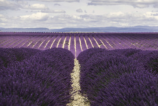 Valensole (Provence - France) | by Kaptah
