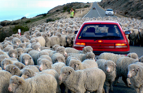 Down a rural road.NZ | by Bernard Spragg