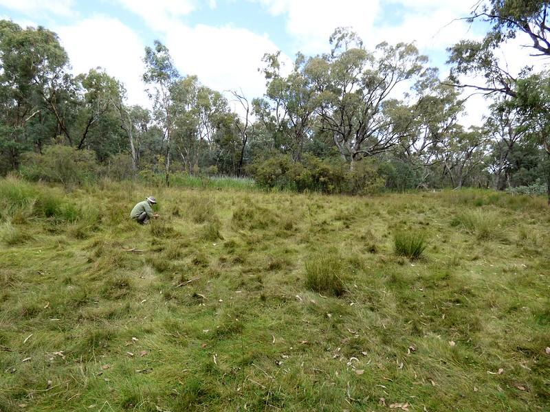 Davitt's Swamp grassy area