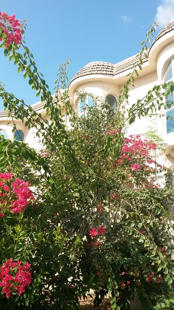 Green World Full Bloom Greenworld Nursery Flickr