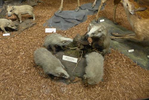 musée zoologique