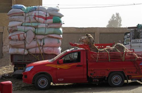 CamelMarket1-18