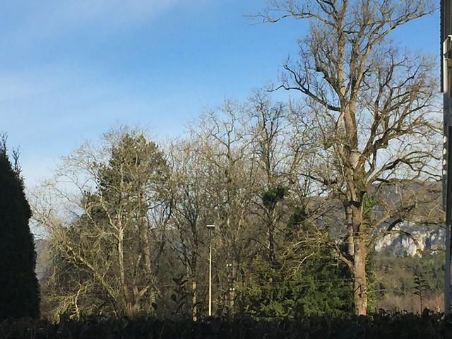 Back Garden view morning